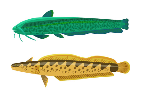 Rainbow trout and wels catfish fish set. Marine fauna animals, freshwater creatures of yellow and green color, isolated on white vector illustration