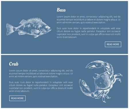 Bass Fish and Crab Posters Set Vector Illustration Çizim