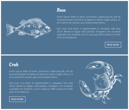 Bass Fish and Crab Posters Set Vector Illustration Illustration