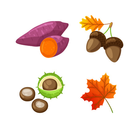 Autumn Food Beetroot and Acorn Isolated Vector 일러스트
