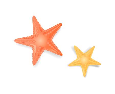 Estrellas de mar estrellas de mar closeup iconos aislados conjunto de vectores. Criatura con forma de estrella que habita en el mar o el océano, organismo con bordes punteados de color rojo amarillo Ilustración de vector
