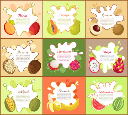 Pitaya and Mango Fruity Fruits Vector Illustration