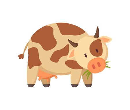 Farm animal friendly spotted dairy cow chewing grass illustration isolated. Rural cattle beast applique in pastel shade for informative color poster.