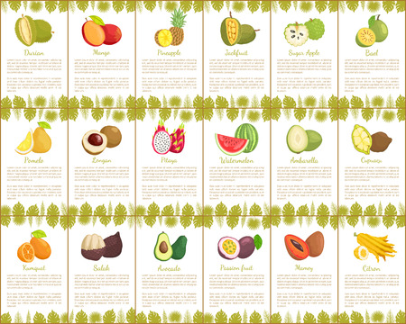 Pomelo and Longan Posters Vector Illustration Banco de Imagens