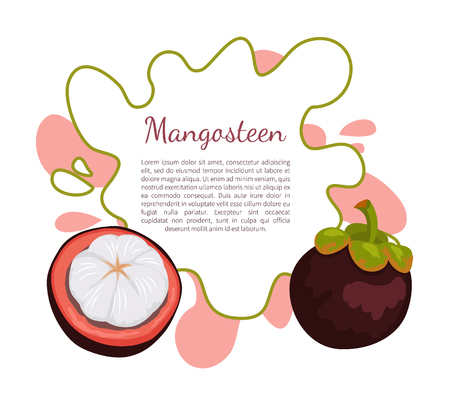 Purple Mangosteen Exotic Juicy Fruit Vector Poster