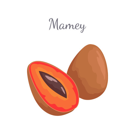 Mamey Exotic Juicy Fruit Vector Whole and Cut Icon Illustration