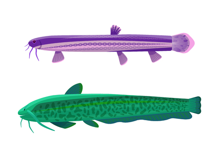 Wels catfish fish types set. Limbless animals of green and purple color. Underwater organisms with gills fin, isolated on white vector illustration