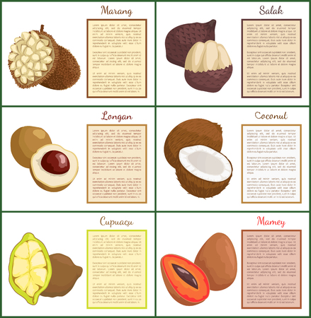 Salak and longan posters set text sample vector. Marang and coconut, cupuacu organic exotic tropical products. Mamey with seed sliced healthy food