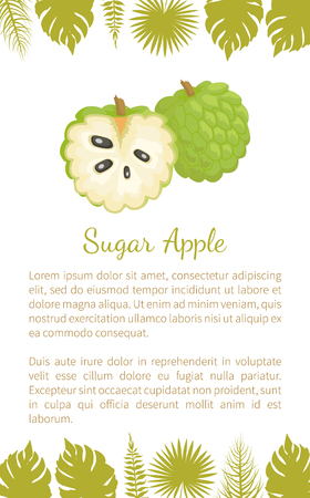 Sugar-apple, sweetsop, or custard apple, Annona squamosa, exotic juicy fruit vector poster text sample and leaves. Tropical edible food, dieting veggies