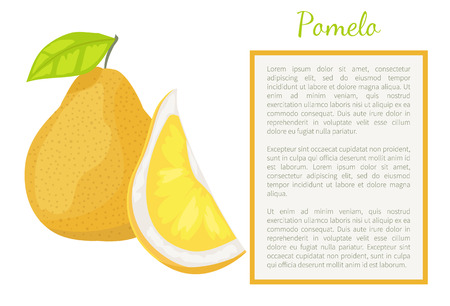 Pomelo exotic fruit whole and cut vector poster frame for text. Tropical food, similar to grapefruit or pear, dieting vegetarian citrus with leaf