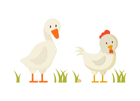 Goose and chicken pair of white domestic birds isolated on white background, vector illustration of duck and chick walking in abstract yard with grass