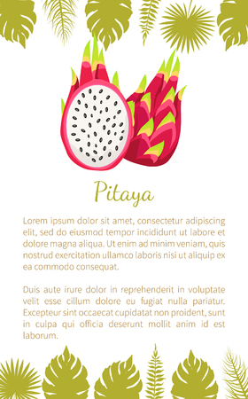 Pitaya or pitahaya exotic juicy fruit vector poster with text sample and palm leaves. Tropical edible food, subtropical dragon fruits whole and cut sign