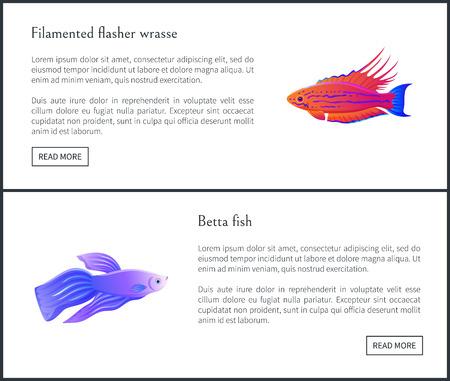 Betta Fish and Flasher Set Vector Illustration