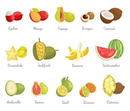 Lychee and Mango Coconut Banana Fruits Set Vector