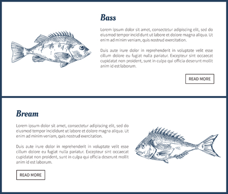 Bass and bream seafood set vector vintage icons. Hand drawn fish graphic, decorative illustrations of ocean animals restaurant menu template sketch. Vecteurs