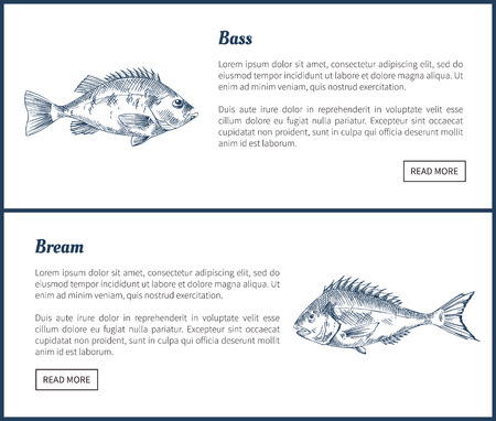Bass and Bream Seafood Set Vector Vintage Icons