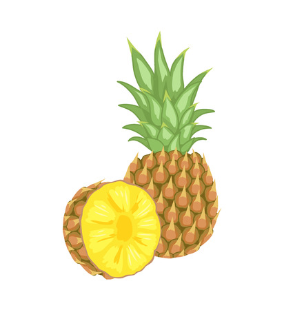 Pineapple Tropical Plant Edible Fruit Poster  イラスト・ベクター素材