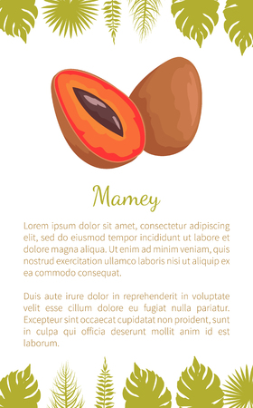 Mamey Exotic Juicy Fruit Vector Poster Text Leaves