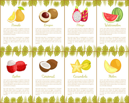 Pomelo and Longan Carambola Set of Posters Vector