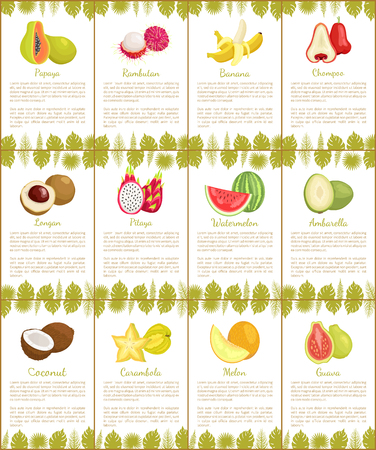 Pomelo and Longan Posters Vector Illustration Illustration