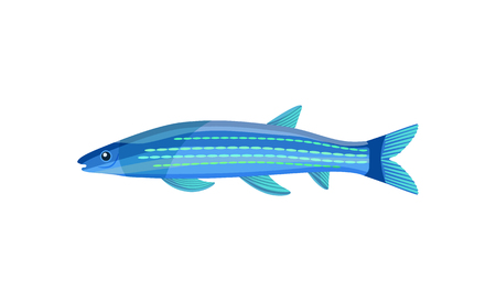 Mackerel blue color fish. Gill-bearing aquatic craniate animals that lack limbs with digits. Long marine organism lives in water vector illustration