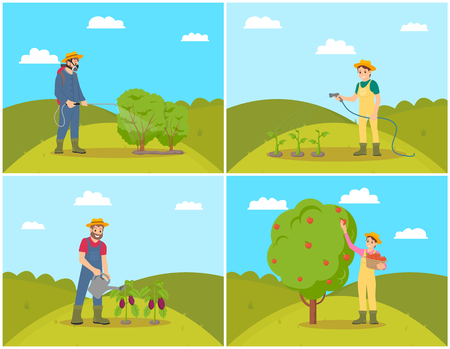 Farmer woman harvesting set vector. Woman and watering plants, vegetables and aubergines. Picking apples fruit from tree, farming people working hard