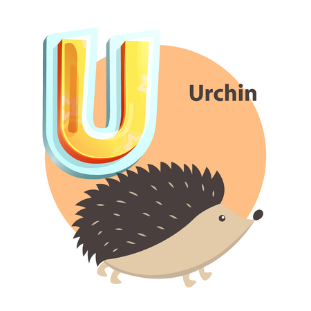 Urchin children alphabet poster with circle and hedgehog. Educational worksheet flashcard with word and letter U. Learning language isolated vector