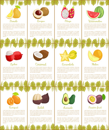 Pomelo and kumquat, marang and avocado, tropical fruits slice. Melon and carambola, lychee and coconut, watermelon and rambutan posters set vector Ilustração