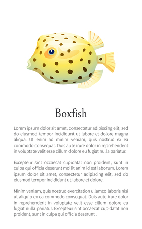 Boxfish animal poster with text sample. Fish of rounded shape with fins and dotted pattern on skin floating isolated on vector illustration, marine creature