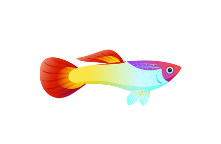 Multicolored marine fish isolated on white poster, vector illustration of guppy underwater animal, shiny fins and flesh, elongate body and small eye