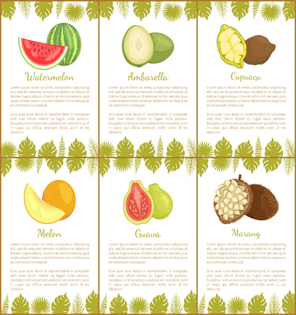 Watermelon and ambarella, cupuacu and melon, guava and marang tropical posters set with exotic fruits and leaves vector illustration with text sample