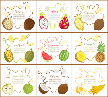 Marang and Jackfruit Posters Vector Illustration Banco de Imagens