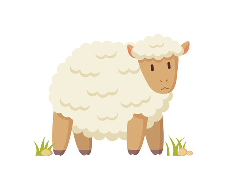 Domestic curly sheep with thick white coat illustration in cartoon style on white background. Funny informative poster for children book or magazine.