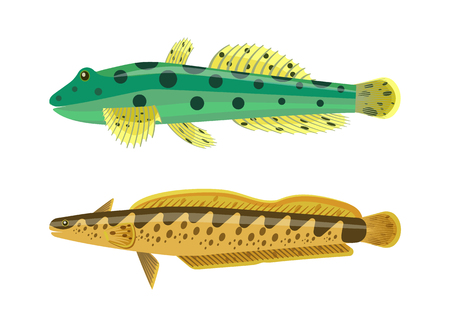 Rainbow trout with green dotted fish. Species of limbless animals. Freshwater creatures dorsal fins, gills and eyes isolated on vector illustration