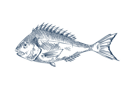 Common Perch Popular Edible Fish Specie Poster Illustration