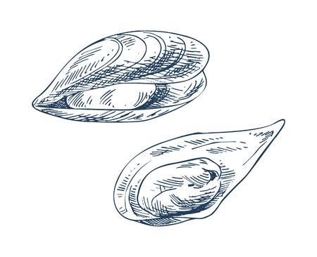 Illustrazioni vettoriali di frutti di mare di cozze e vongole