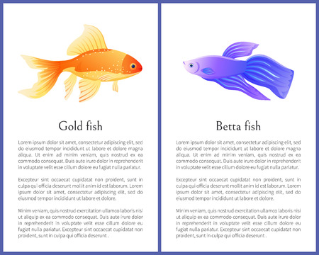 Gold and Betta fish vector illustration poster with text sample. Color marine creatures exotic goldfish and bettafish, rare aquatic marine spieces Foto de archivo - 127115979