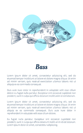 Bass or bream marine creature as seafood flat vector illustration in sketch style. Nautical information poster on white and blue spots with text.