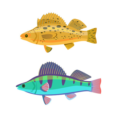 Fish yellow and blue zebras set. Aquatic dwellers of seas and oceans. Tropical fauna representatives spots on back isolated on vector illustration