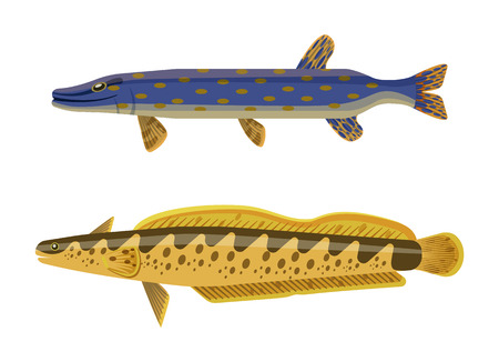 Dark blue with brown inclusion predator pike fish and yellow spotted catfish. Underwater inhabitant vector cartoon illustration on white background. Illusztráció