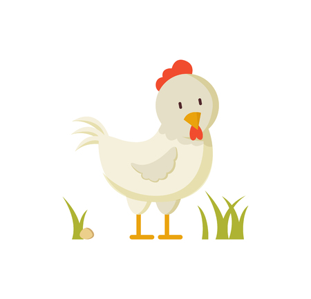 White hen with red crest domestic bird in green grass vector illustration in cartoon style. Farm animal chicken isolated, for thematic book or site.