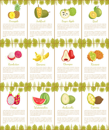Pomelo and Longan Posters Vector Illustration Stock Vector - 113462074