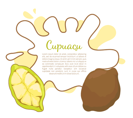 Cupuacu exotic cupuassu, cupuazu and copoasu, tropical rainforest fruit related to cacao vector poster frame and text. Dieting vegetarian icon, edible