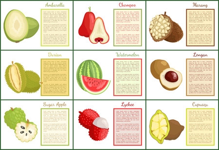 Ambarella chompoo posters set with text sample vector. Tropical exotic fruits sugar apple, lychee and cupuacu, watermelon and marang jackfruit food Illustration