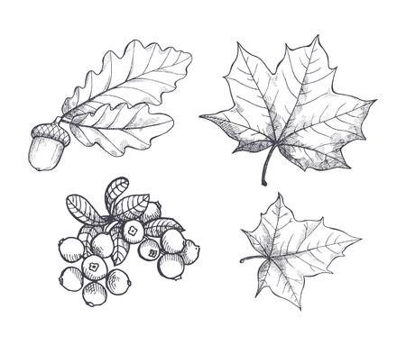 Ahornblatt und herbstliche Eichel hängenden Set Vektor