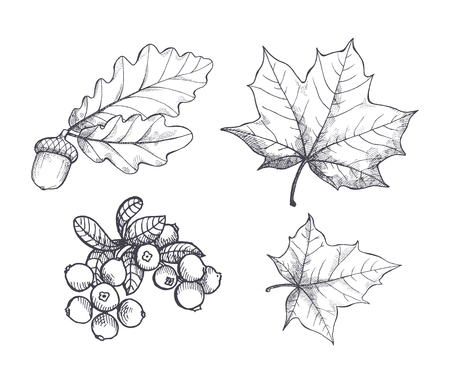 Maple Leaf and Autumnal Acorn Hanging Set Vector