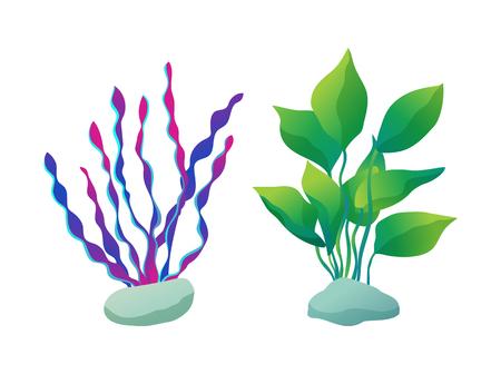 Seaweed types set marine underwater plants. Stones and purple green sea and ocean floral. Decorative elements of aquarium items vector illustration