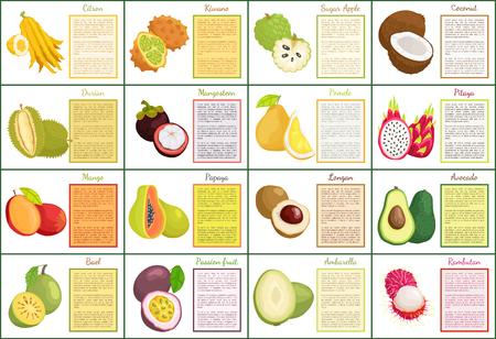 Citron Kiwano and Coconut Set Vector Illustration 向量圖像