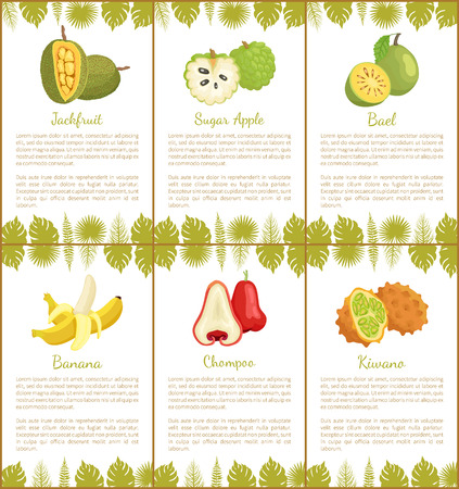 Jackfruit and sugar apple, bael and banana, champoo and kiwano tropical posters set with exotic fruits and leaves vector illustration with text sample Illustration