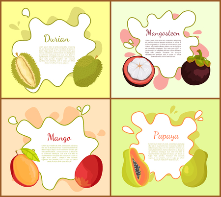 Durian, and Mangosteen Mango Vector Illustration